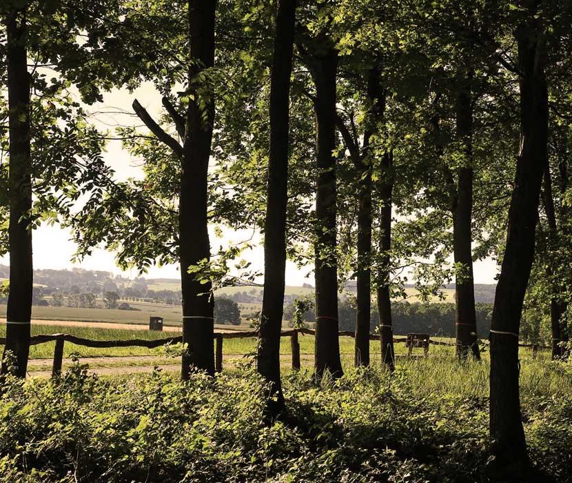 Blick vom Bestattungswald im Schönburger Land auf die umgebenden Felder